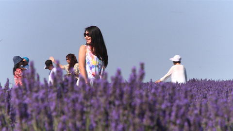 The Chinese, wild about Provence
