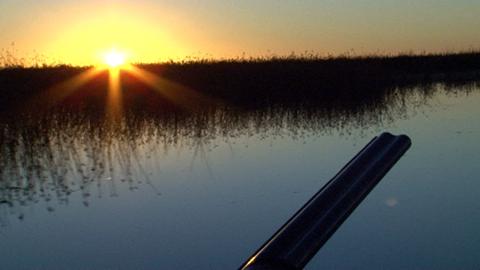 Argentine, chasse dans la Pampa humide