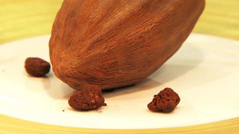 Les aventuriers du cacao