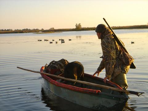 Grandes migrations en Camargue