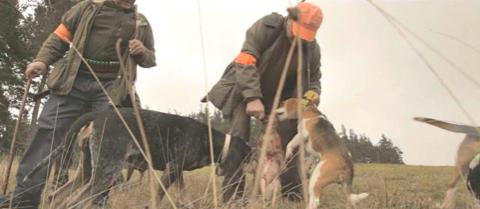 Une chasse paysanne en France