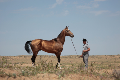 THE EXTRAORDINARY STABLES OF TURKMENISTAN