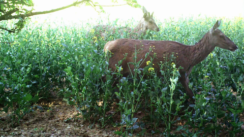 GRANDS GIBIERS HORS CHASSE