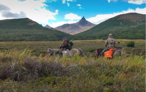 Kamchatka, chasse aux mouflons Nivicola