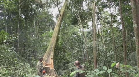 LEgion : mission trEs spEciale au cŒur de l'enfer vert